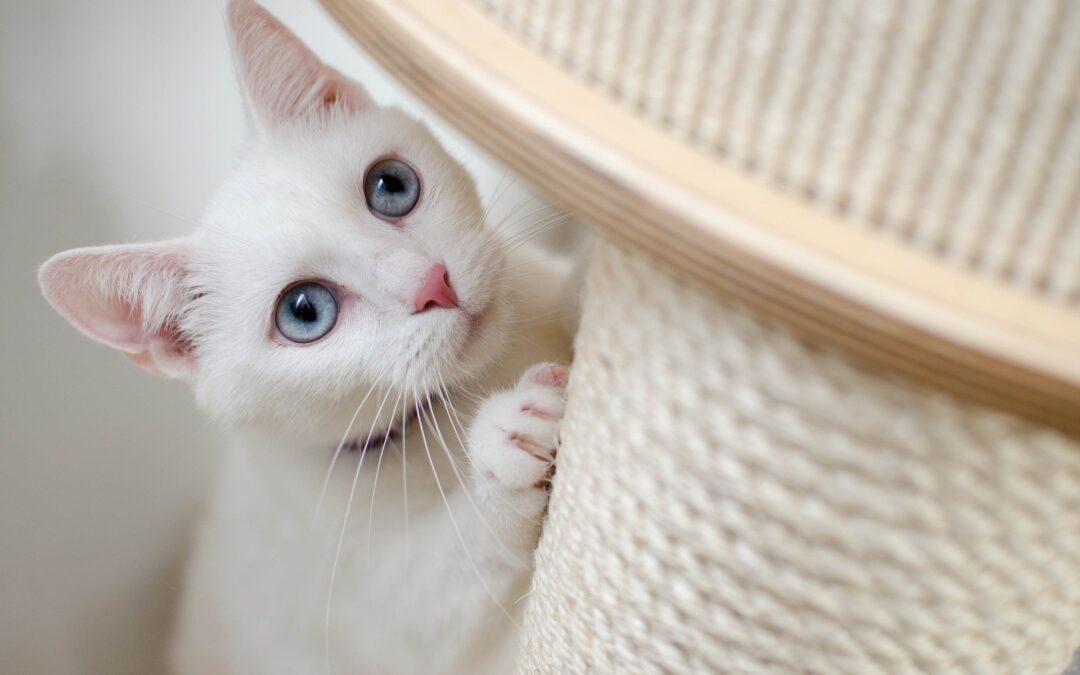 Vælg den rette kattemad til din kat