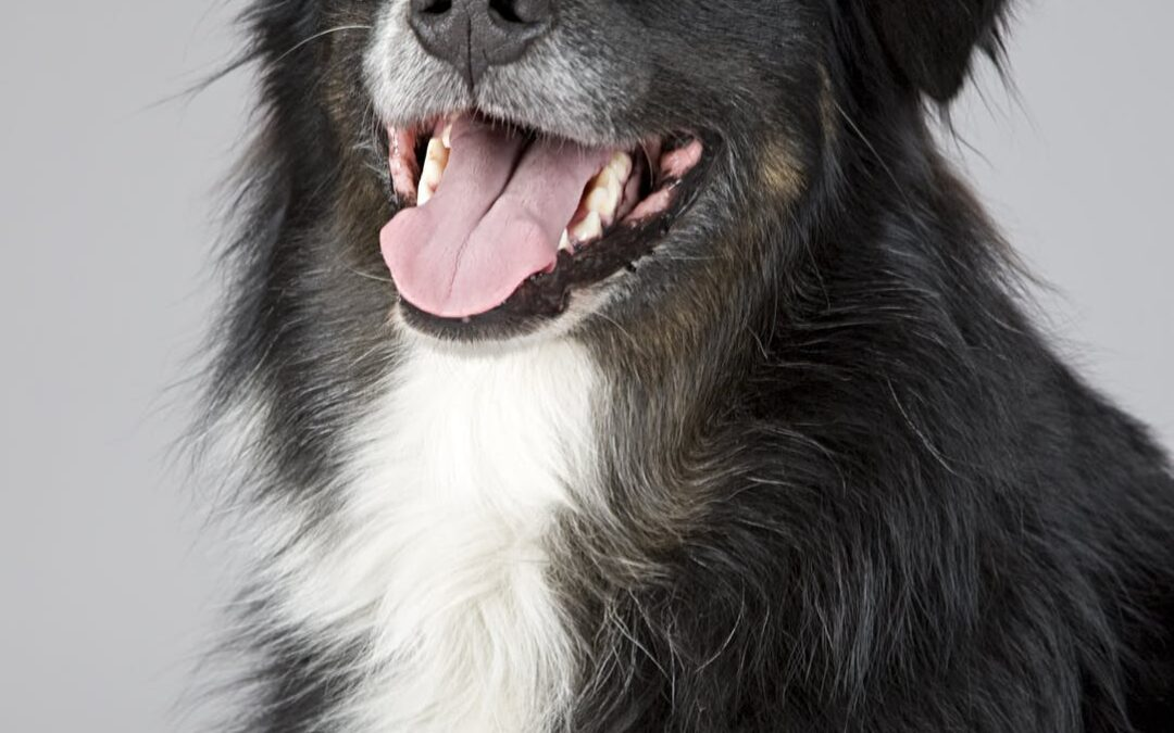 Køb en hundeseng til din hund