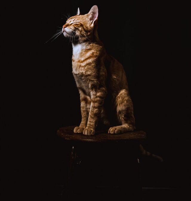 Hvilket kattelegetøj skal du have fat i?
