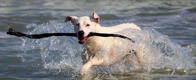Beskyt din hund på sommerens ture i år
